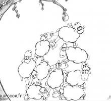 dessin de moutons