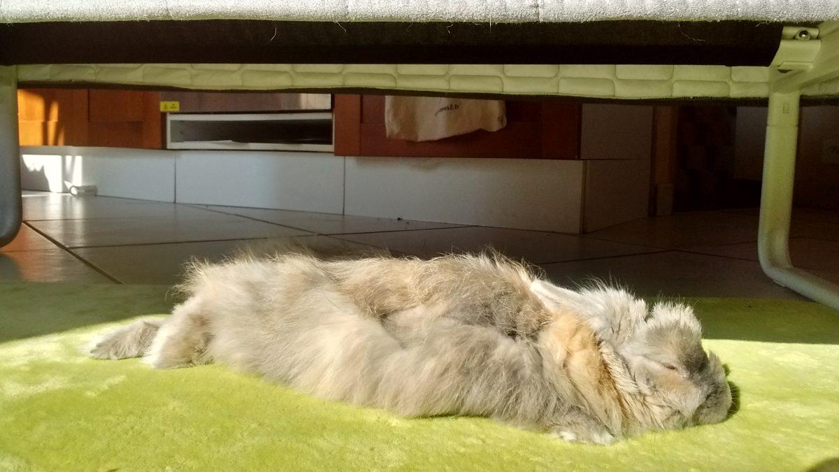 Mes lapins vivent en liberté